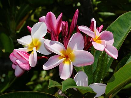 Exotiska blommor och platser